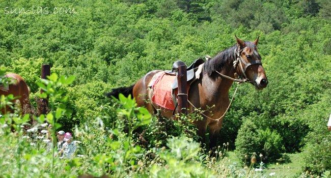 Лошади - средство передвижения по Куле-Бурун