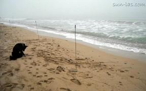 Поход к морю. Новый год на солдатском пляже.