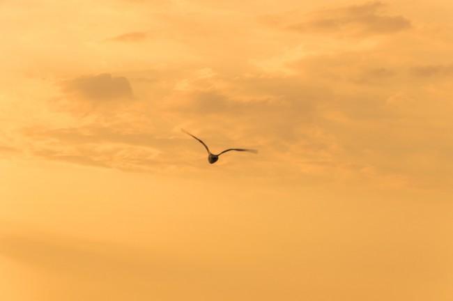 чайка, Заозерное
