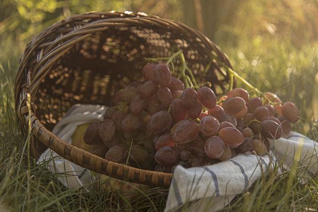 осень, виноград